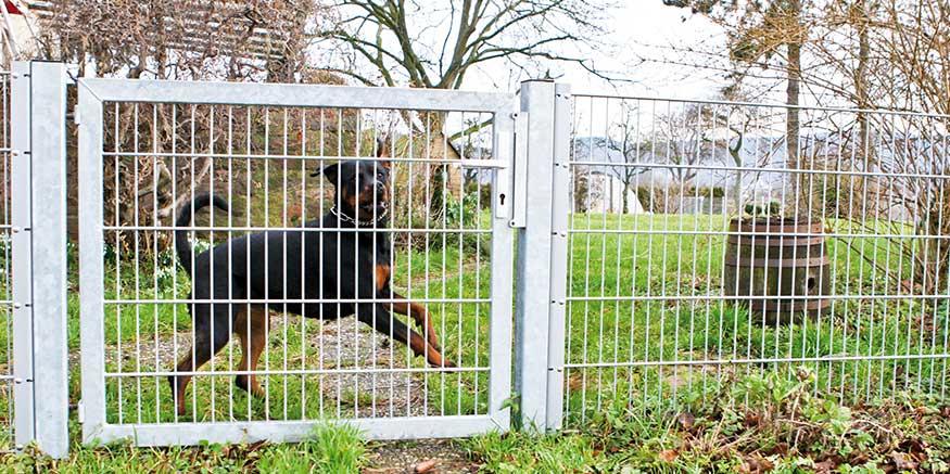 Hund hinter Gartenpforte
