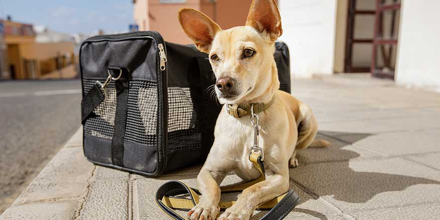 Hund neben Transportbox